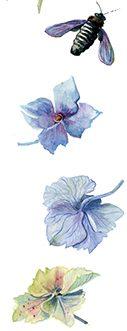 """Marque page botanique """"Planche botanique 2"""""""