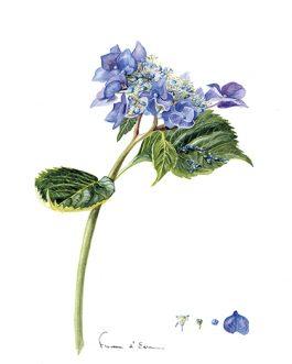 10 Cartes postales Botaniques différentes A6