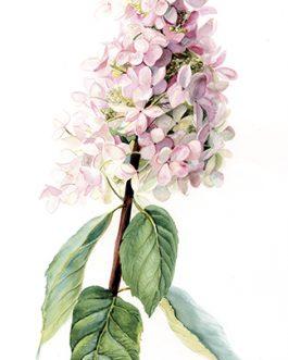 Carte postale botanique A6