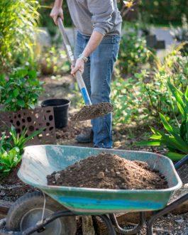 Forfait mise en place des hortensias dans le pot par nos soins