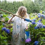Avoir et garder des hortensias bleus
