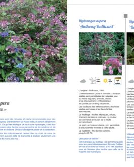 L'encyclopédie de mes plus beaux hortensias et hydrangea