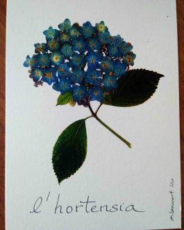 "Carte postale A6 ""L'hortensia de Bretagne"""